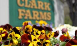 Clark Farms Gallery Image 13