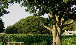 Clark Farms Gallery Image 15